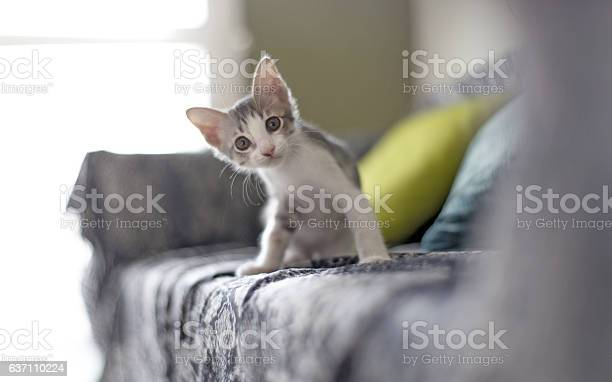 Baby cat picture id637110224?b=1&k=6&m=637110224&s=612x612&h=gfvrzrwsegpldseydxo4dr84ahud7wj0pcyp18yfovo=