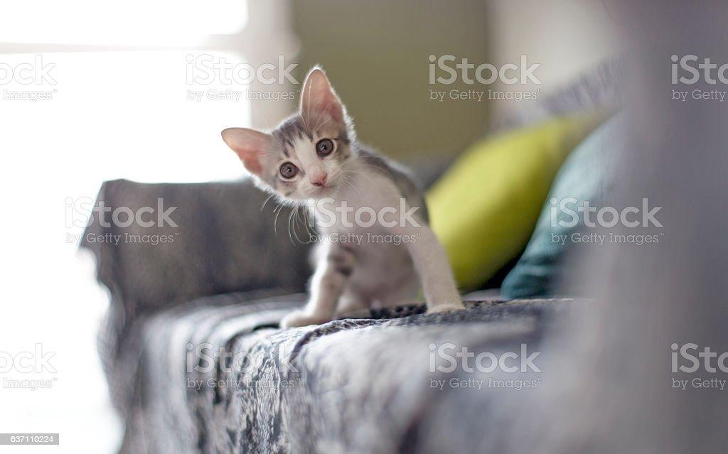 De bebé cat - foto de stock