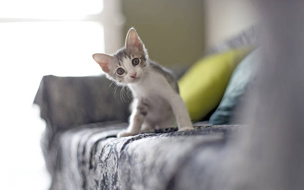 baby cat - kitten stock photos and pictures