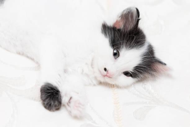 Baby cat picture id894278646?b=1&k=6&m=894278646&s=612x612&w=0&h=o o4unix68mg9r r2ws5uuuab3 5wpqhbc62a9 pw0u=