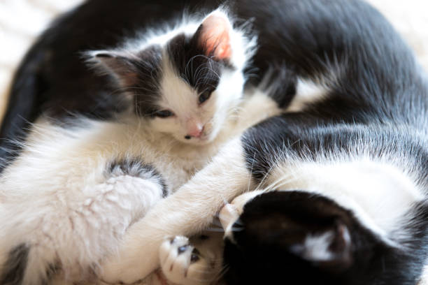 Baby cat picture id894305482?b=1&k=6&m=894305482&s=612x612&w=0&h=g23hdd jinu6jg5ztp5wvj43i840ceqylr25ctmzilm=