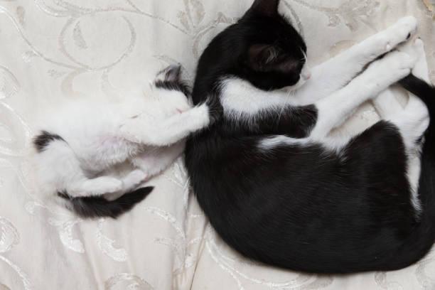 Baby cat picture id894378356?b=1&k=6&m=894378356&s=612x612&w=0&h=lfz wfugmwzmgfm2inoziocy8yc0ujioahwtv9sfpc0=