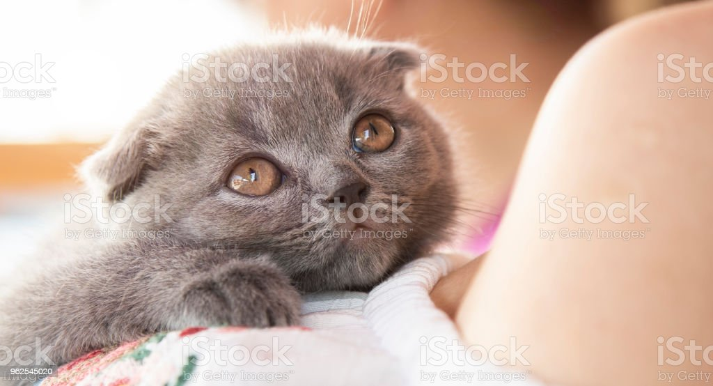 A baby cat - Royalty-free Animal Stock Photo