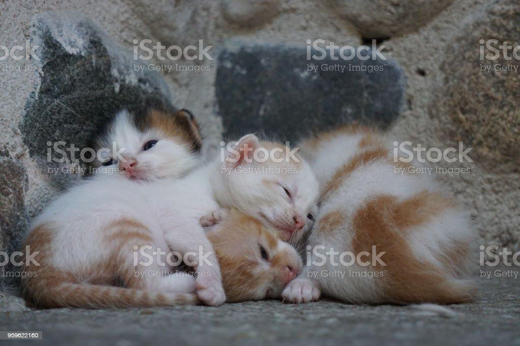 Bebé gatos - Foto de stock de Amor libre de derechos