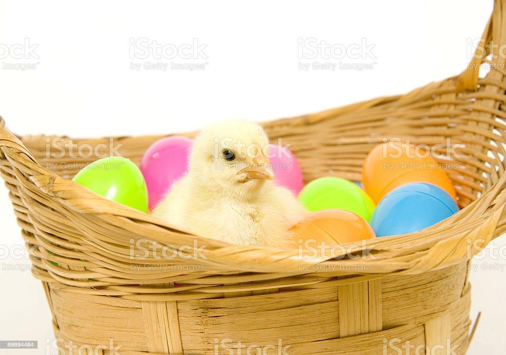 baby chick in einen Korb mit Ostern Eier aus Kunststoff Lizenzfreies stock-foto