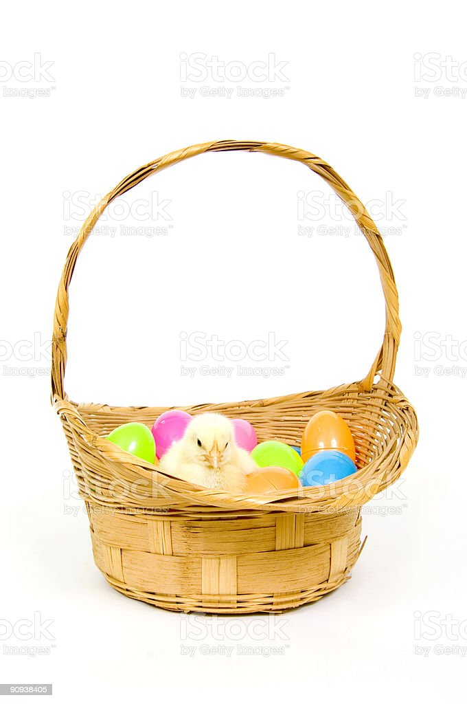 baby chick in a basket with plastic Easter eggs royalty-free stock photo