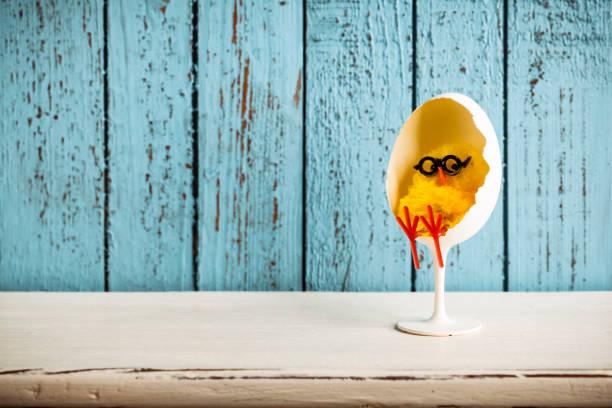 baby chicken relaxes in design egg chair - buona pasqua in tedesco foto e immagini stock