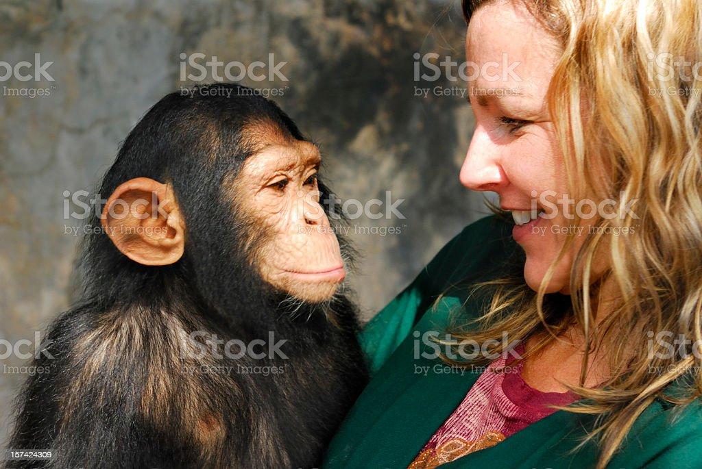 Baby Chimp and Handler stock photo