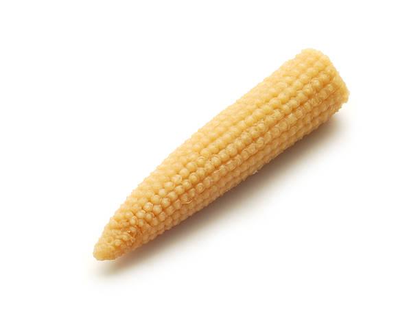 baby corn cob stock photo