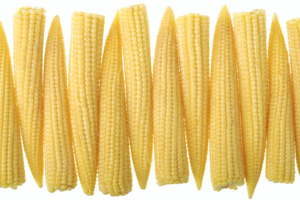 Baby corn in a row stock photo