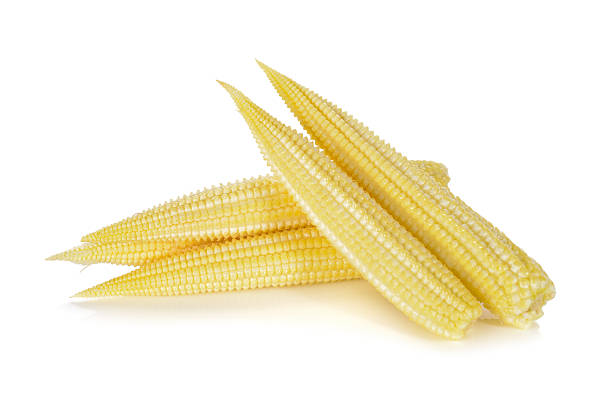baby corn isolated on white background stock photo