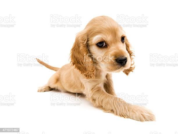 Baby dog picture id471072467?b=1&k=6&m=471072467&s=612x612&h=xd28bf8wshzbyoj0cj cws2s5bmikm3yghfgwpnbjoy=