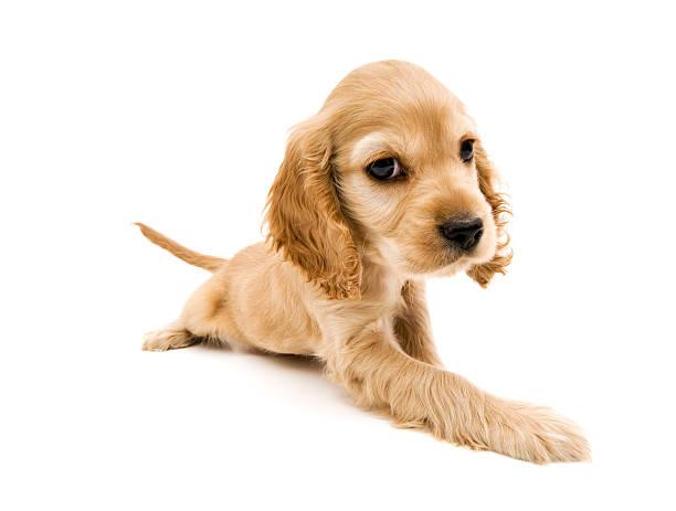 Baby dog picture id471072467?b=1&k=6&m=471072467&s=612x612&w=0&h=r9iky1kghlhdmsxc0ook gsmdt5t6lz47wo qnhiznc=