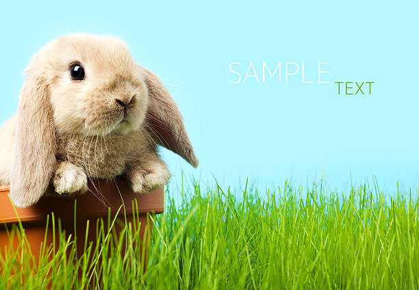 baby Easter bunny on spring green grass stock photo