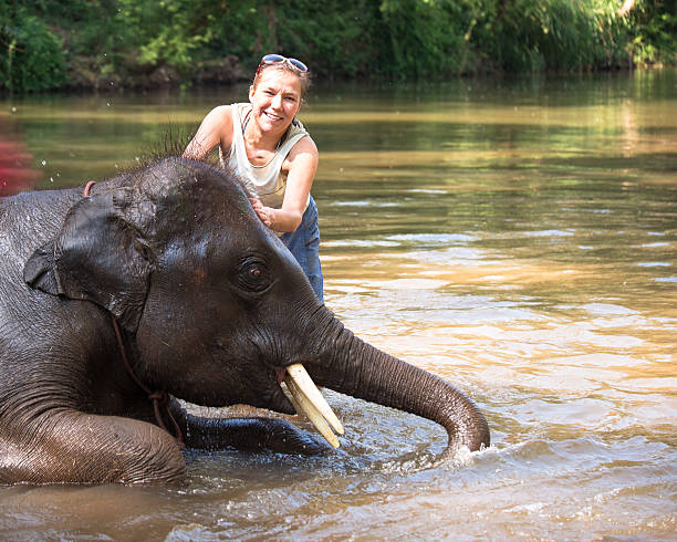 Baby elephant bathing in river and next elephant standing woman stock photo