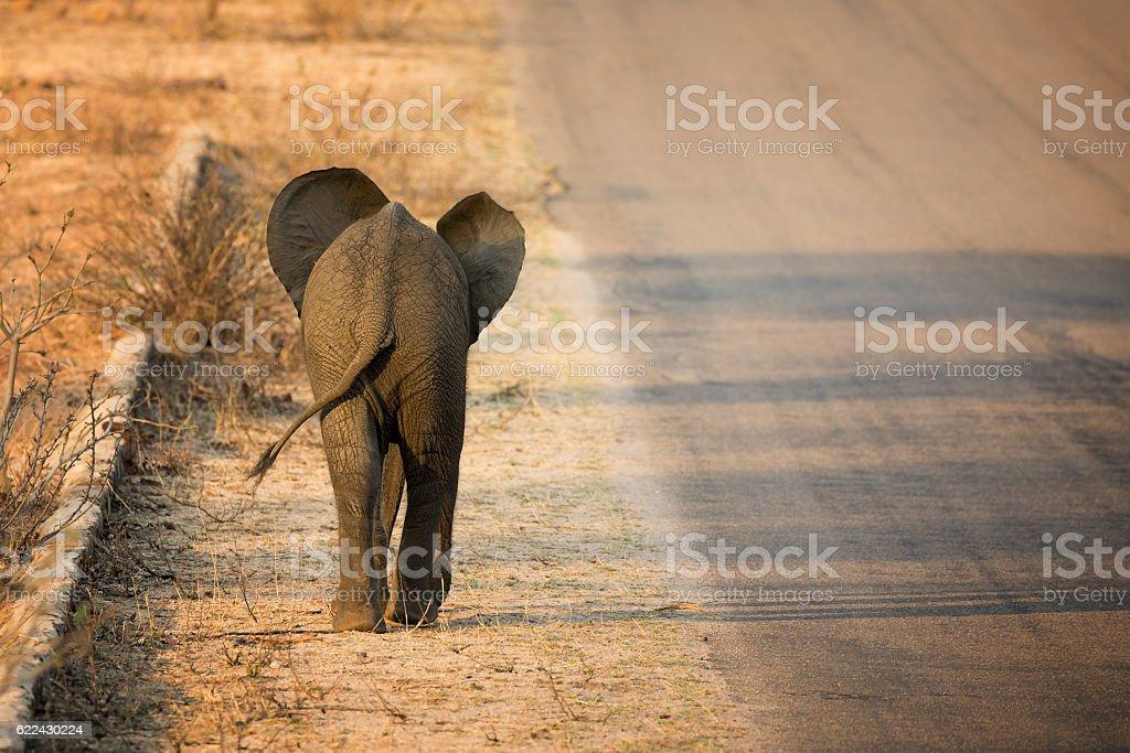 Baby elephant rear view stok fotoğrafı