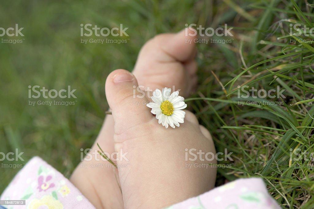 Baby Feet Holding Daisy in nature stock photo