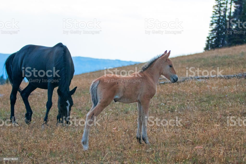 Horses Mustang Images Search Images On Everypixel