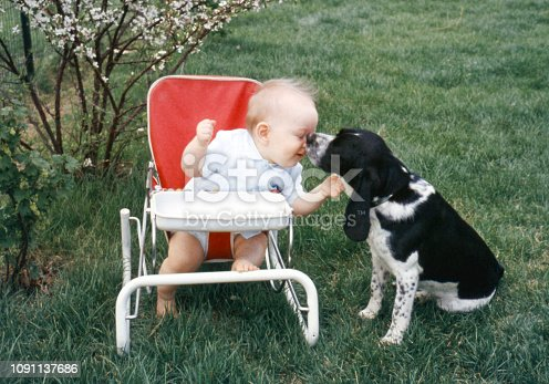 Baby boy sitting outdoors in baby chair getting doggie kisses. Iowa, USA 1959. Scanned film with grain.