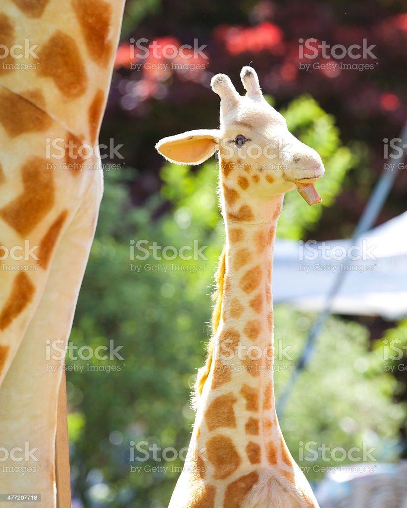 Baby giraffe with adult at side  - toy model stock photo