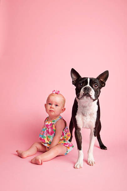 Baby girl and boston terrier sitting on pink background picture id182437385?b=1&k=6&m=182437385&s=612x612&w=0&h=lpl79lgqgxxhgjlg1tymkdkffhwsirrtls8bb9hy5lg=