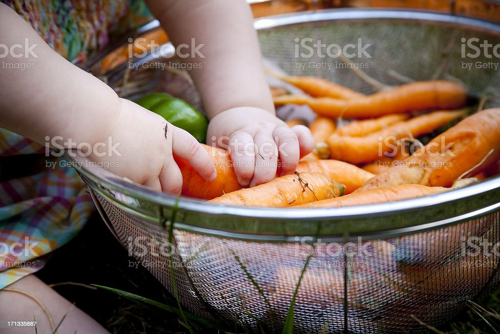 Baby Girl Finds Healthy Food: Carrots stock photo