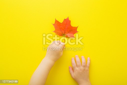 Baby girl hand touching fresh, red maple leaf on yellow table background. Closeup. First autumn leaves exploring. Point of view shot. Top down view.