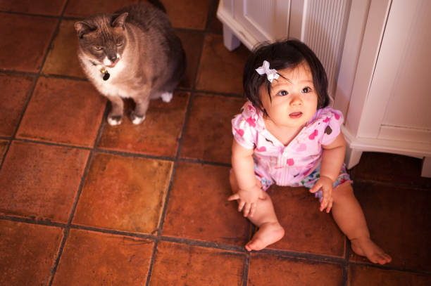 Baby girl hanging out with pet cat stock photo