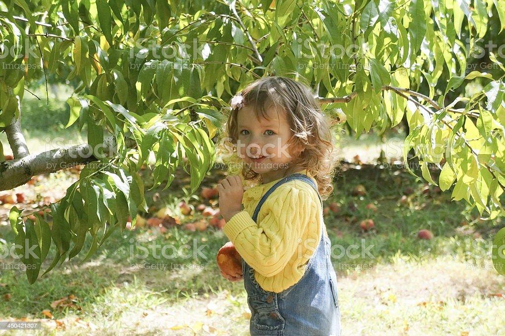 Baby girl is eating a peach on the farm stock photo