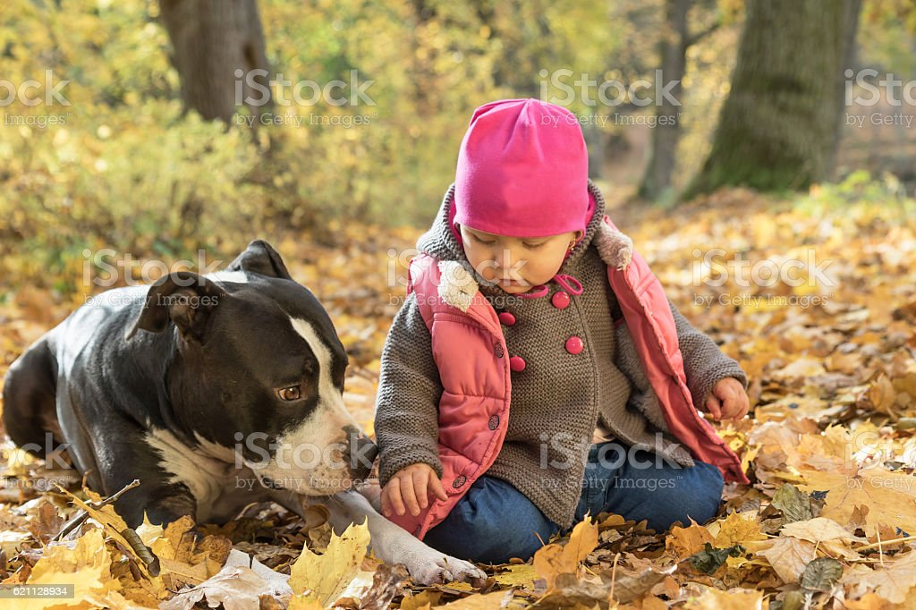 Baby girl is playing with American staffordshire terrier in park stock photo
