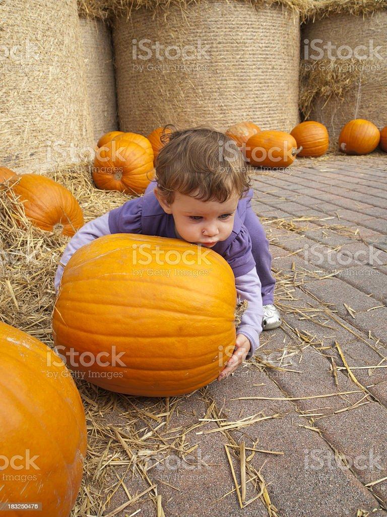 Baby Girl picks pumpkins stock photo