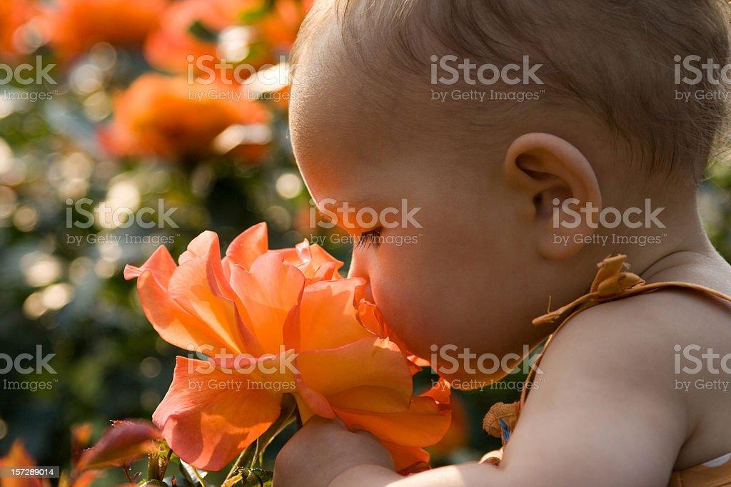 Baby Girl Smelling Giant Rose stock photo 157289014 | iStock