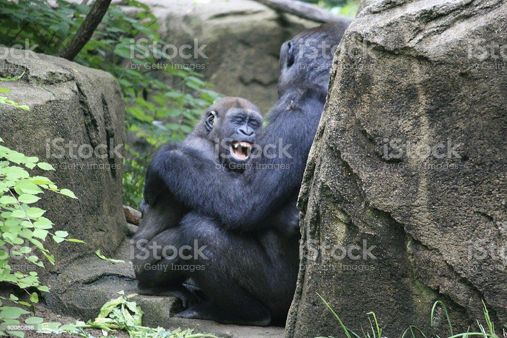 Baby Gorilla Smile stock photo