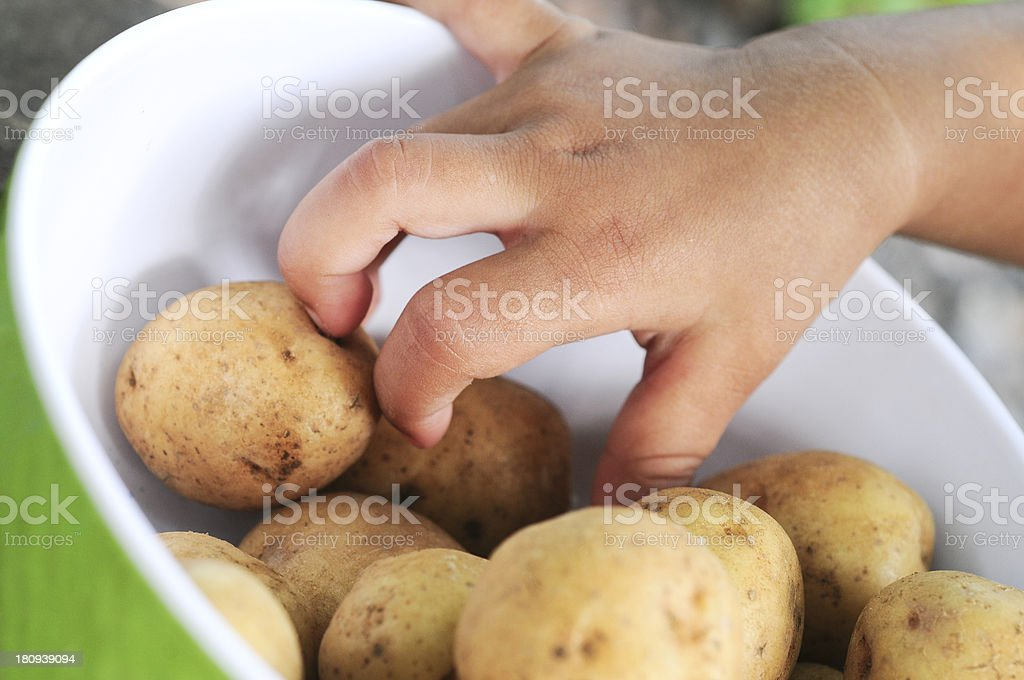 Baby Hands and Raw Potato stock photo