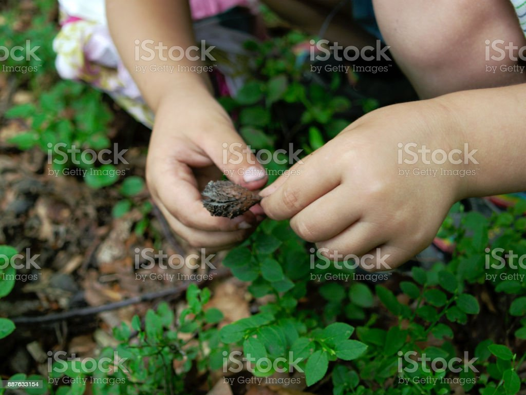 Baby hands holding plant stock photo