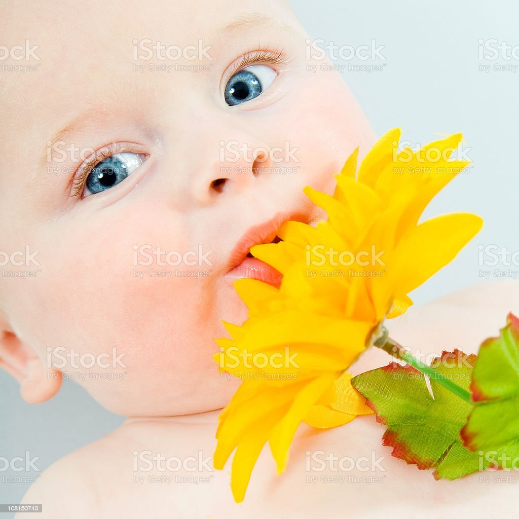 Baby Holding Flower stock photo