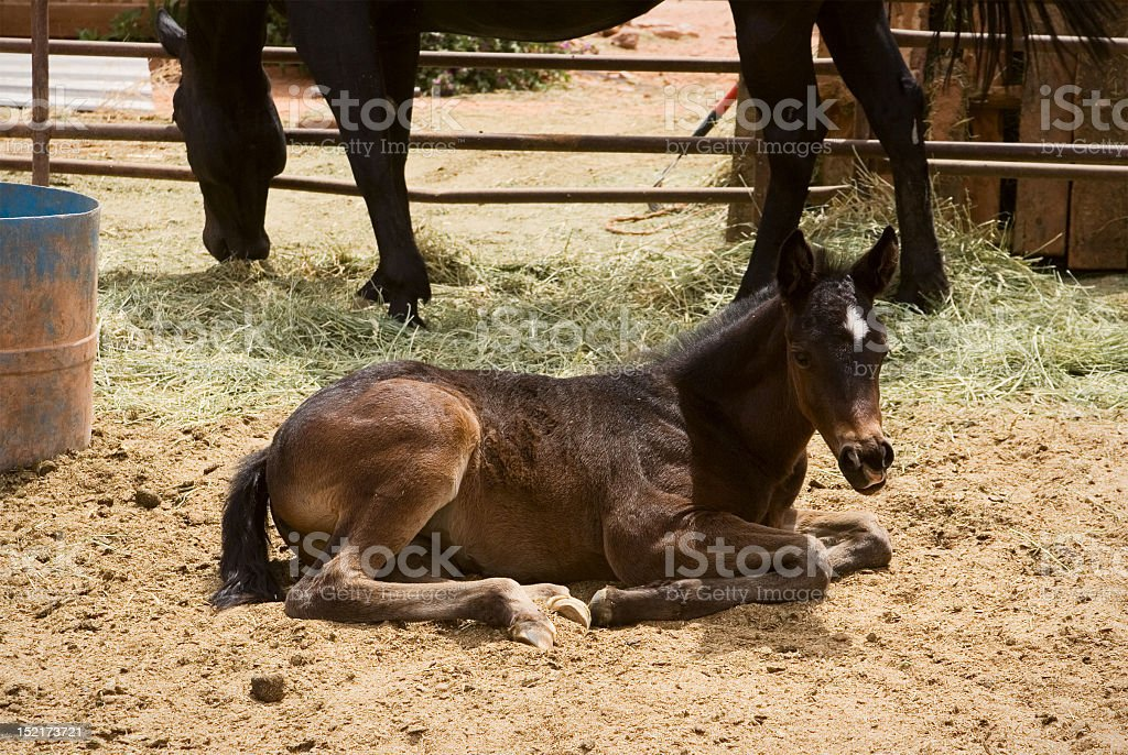 Baby Horse And Mom Stock Photo Download Image Now Istock