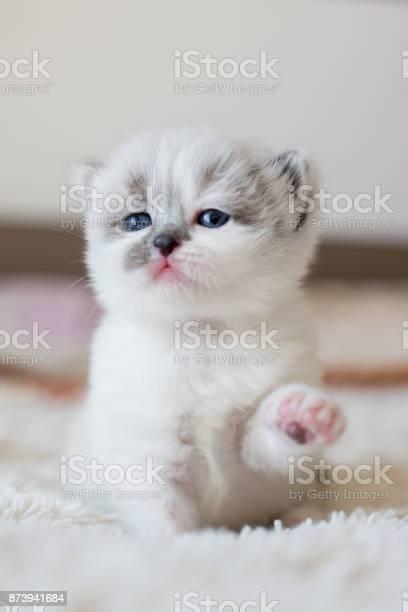 Baby kitten and his paw up picture id873941684?b=1&k=6&m=873941684&s=612x612&h=gwna8  4td5 bclsrmsee xlreq9sn0vsazu8qizs04=