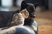 istock Baby kitten loving on a dog 1284834234
