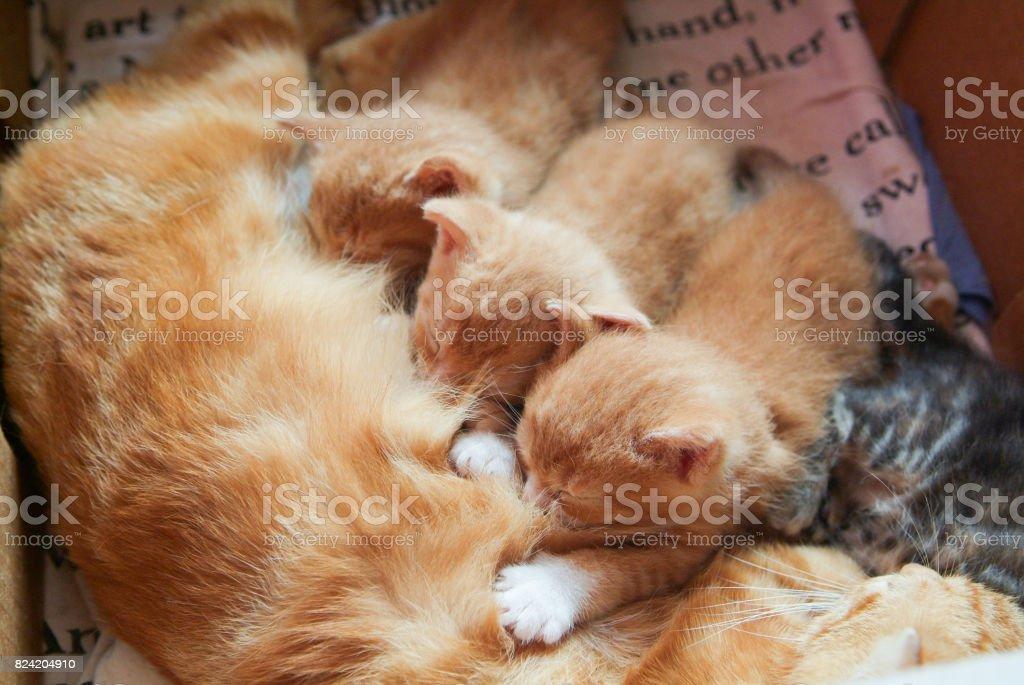 Baby Kätzchen füttern – Foto