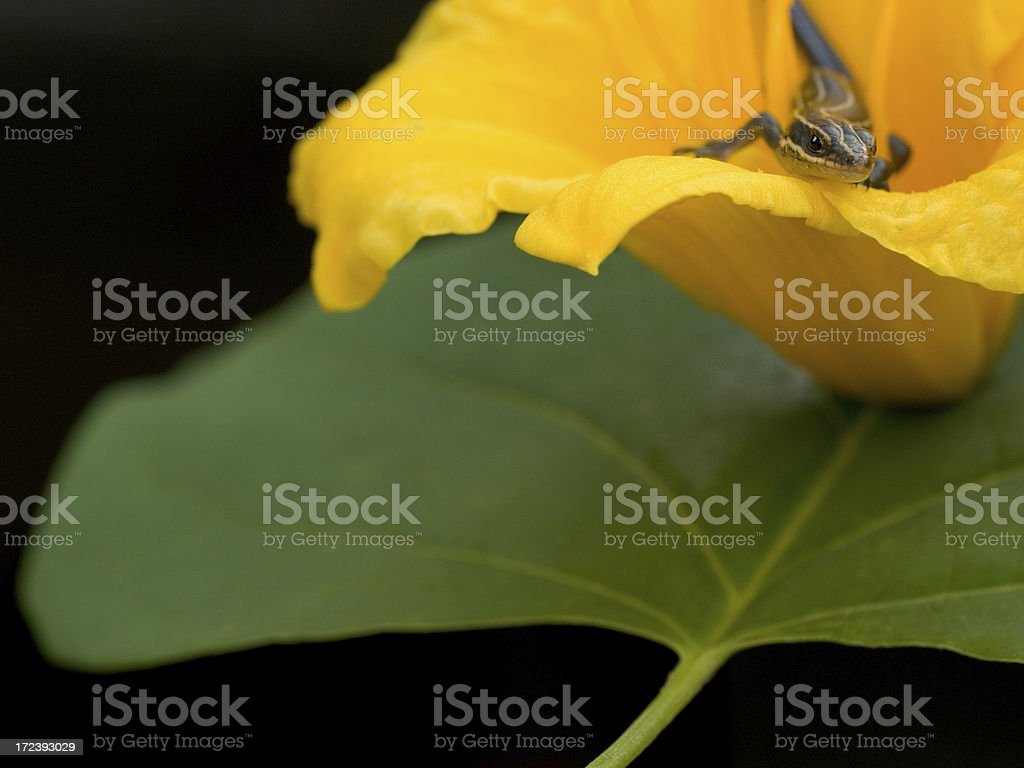 Baby Lizard In Day Lilly Over Green Leaf stock photo
