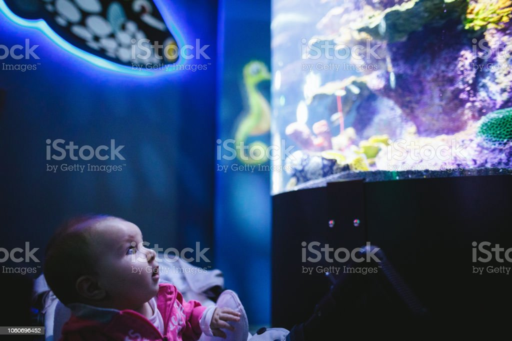 Baby looking fish tank stock photo