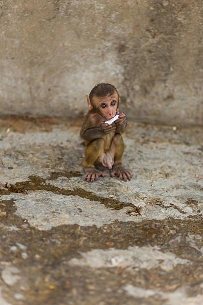 Baby Makake  – Foto