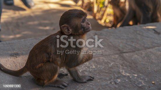 Baby Monkey at Monkey Temple