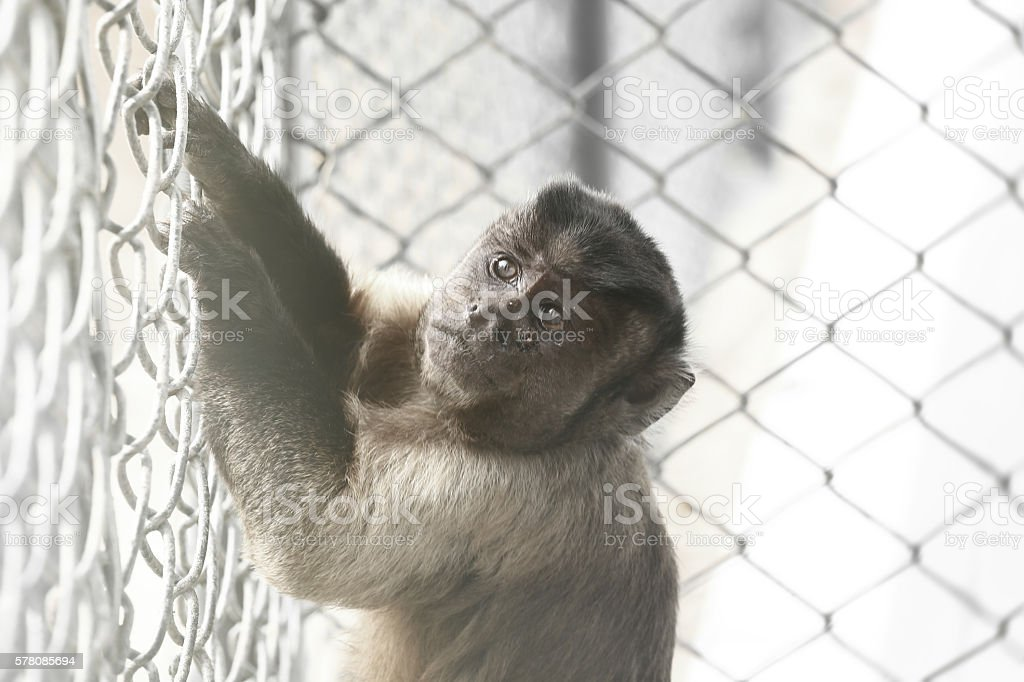 Baby Monkey in Cage stock photo