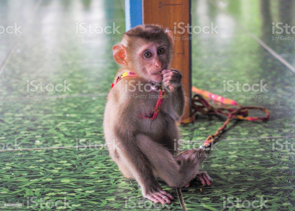 ペット サル Animal_Monkeys