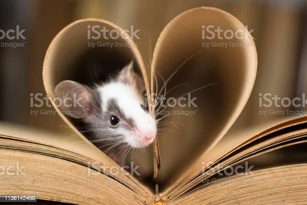 Baby mouse and old book picture id1136142450?b=1&k=6&m=1136142450&s=612x612&h=lnzvq4dpkrhkx9w6vxp6sx7ntrzvolofoh3hjaio7kw=
