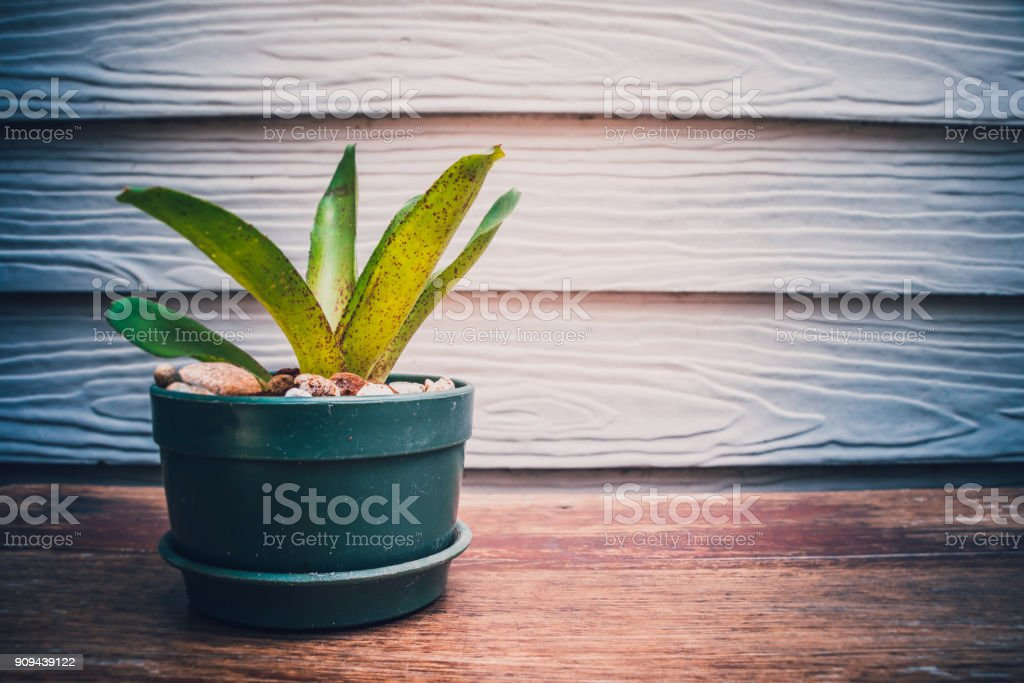 Baby orchids in green pot on wood floor stock photo