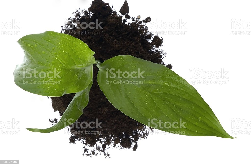 baby plant in soil royalty-free stock photo