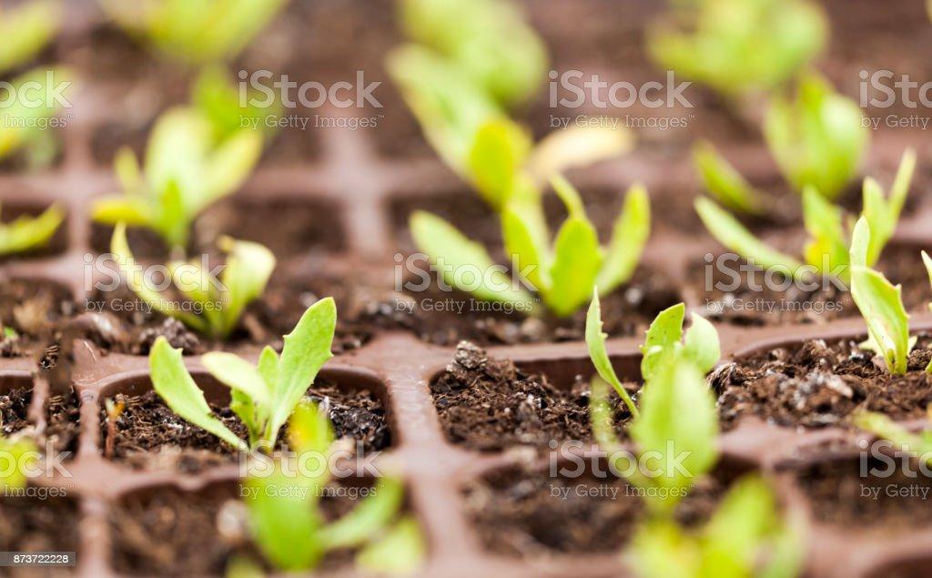 Plantes en Pots bébé - Photo